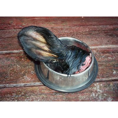 Hovězí ucho 1kg